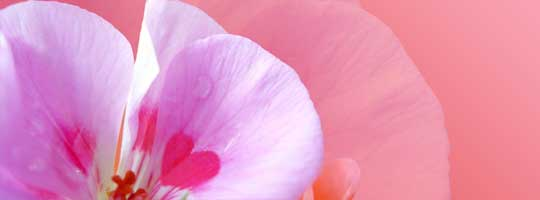Pink Heart Flower Facebook Cover